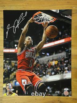 Derrick Rose Psa/dna Signé 16x20 Photo Mint Autograph, Chicago Bulls, Mvp Auto